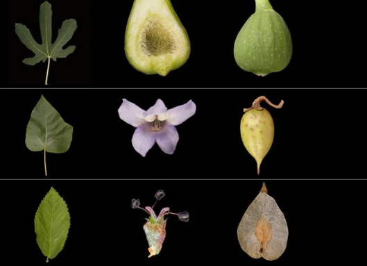 leafsnap-app-ID-plants-flowers-gardenista
