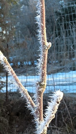 frosty-morning_33545389445_o