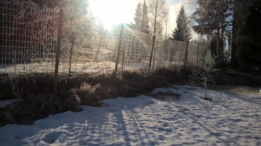 frosty-morning_33545389895_o