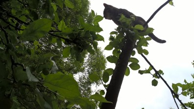 greta-climbing-apple-tree_35722803261_o