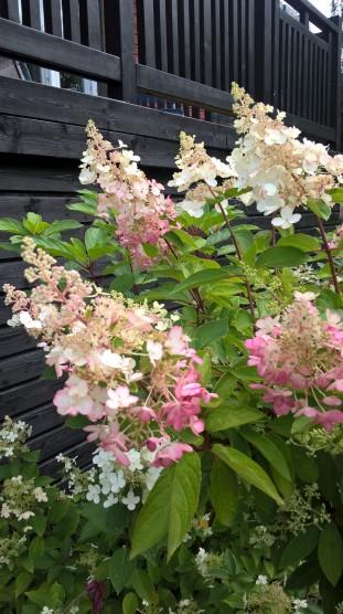 assorted-garden_37491290261_o