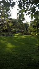 garden_23639197898_o